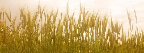 Getreide und leaky gut syndrom_kohlenhydrate tabelle
