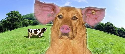 innerer schweinehund-4 stunden koerper marathon-kohlenhyrate tabelle